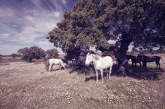 Horses grazing in the field on a sunny day Stock Photo