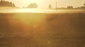 Horses grazing on a foggy pasture during sunrise stock footage