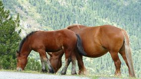 Horses grazing in freedom. stock footage