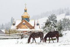 Horses grazing in front of traditional orthodox church Royalty Free Stock Photos