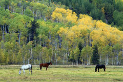 Horses Grazing in Grand Teton Meadow. Horses grazing in a meadow during autumn in Grand Teton National Park, Wyoming Royalty Free Stock Photography