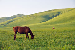 Horses grazing grass Stock Photo