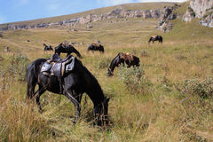 Horses grazing on grass. Horses with saddles on them graze on the grass in the North Caucasus during autumn Royalty Free Stock Image
