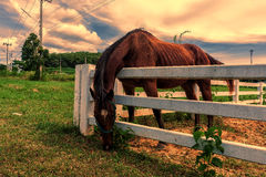 Horses grazing grass on the farm . Stock Image