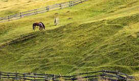 Horses grazing on a grassy hillside. With wooden fences. lovely rural scenery in autumn Royalty Free Stock Image