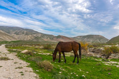 Horses grazing Stock Photo