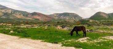 Horses grazing Stock Photos