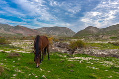 Horses grazing Royalty Free Stock Images