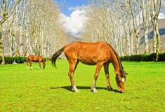 The horses stock images