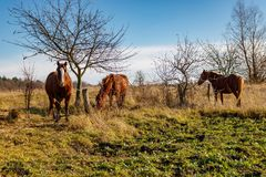 Horses grazing on a green lawn against the blue sky background Royalty Free Stock Photos