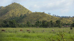 Horses grazing in green meadow. stock footage