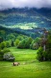 Horses. Grazing horses on green mountain meadows, Slovakia Royalty Free Stock Photography