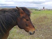 Horses grazing on green pastures.  Stock Photo