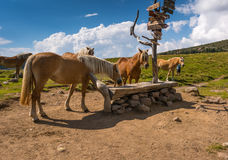 Horses grazing. Group of horses are grazing in the high mountains Royalty Free Stock Image