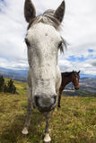 Horses grazing on the heights of the mountains Royalty Free Stock Image