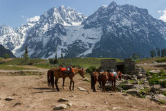 Horses grazing, ice covered mountains Royalty Free Stock Images