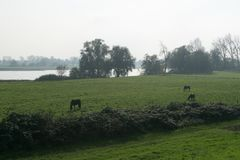 Horses grazing on the lawn among the trees by the river in the morning royalty free stock photos