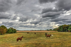 Horses grazing on a Maryland Farm in Autumn Royalty Free Stock Photography