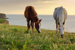 Horses grazing on the meadow Stock Photo