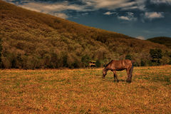 Horses grazing on a meadow. In the afternoon sun Royalty Free Stock Photography
