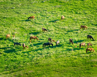 Horses grazing in a meadow Stock Photos