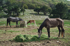 Horses grazing in the meadow in the mountain, nature, beauty, trees stock image