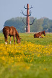 Horses grazing in a meadow near the city Royalty Free Stock Images