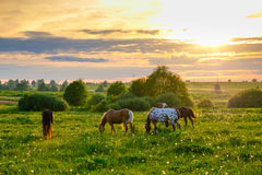 Horses grazing in the meadow at sunset Stock Photos