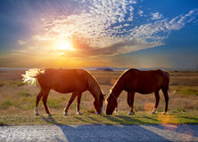 Horses grazing in a meadow. Two horses grazing in a meadow at sunset Stock Images