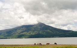 Horses grazing by mountain Stock Photography