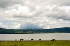 Horses grazing by mountain. Horses grazing by Lake Chapala, Mexico, with Mt. Garcia in background Stock Photos