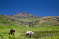 Horses grazing in a mountain paddock Stock Photography