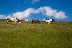 Horses Grazing Mountain Royalty Free Stock Photos