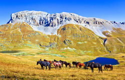 Horses grazing in a mountain valley. The Caucasus mountains, Arhiz region, Russia Stock Photos