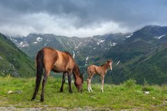 Horses grazing Royalty Free Stock Image