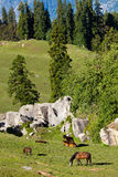 Horses grazing in mountains Stock Images