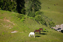 Horses grazing in mountains Stock Image