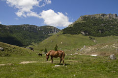 Horses grazing in the mountains Stock Photos