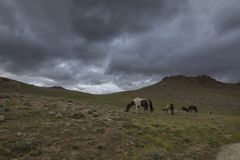 Horses Grazing near chandrataal lake in Spiti Valley Royalty Free Stock Images