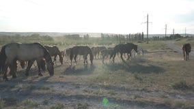 Horses graze near a rock stock video