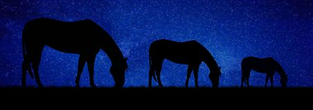 Horses grazing at night. Abstraction. royalty free stock images