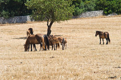 Horses grazing in a paddock. Stock Photos