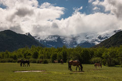 Horses grazing at Pampa Linda in Patagonia Royalty Free Stock Image