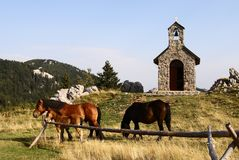 Horses grazing on pasture in front of chapel. National park north velebit croatia Royalty Free Stock Images