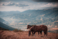 Horses grazing in pasture in mountains. Autumn landscape. Stock Photo