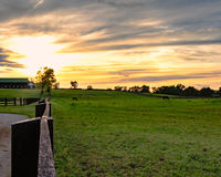 Horses grazing on pasture with sunset in background Stock Image