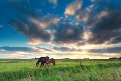 Horses grazing on pasture at sunset Stock Photo