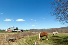Horses Grazing in the Pasture Royalty Free Stock Photos