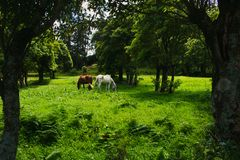 Horses grazing on pasture under the mountains during bright day stock photo