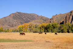 Horses grazing in prairies Royalty Free Stock Photos